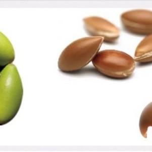 leo-de-argan-semente2